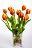 Belles tulipes de rouge orange sur le fond blanc pur Photos libres de droits