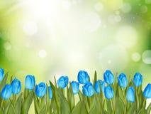 Belles tulipes ENV 10 Photographie stock libre de droits
