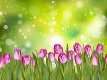Belles tulipes ENV 10 Image libre de droits