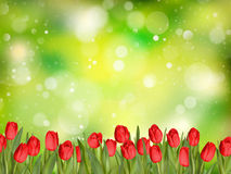Belles tulipes ENV 10 Photos libres de droits