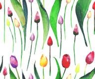 Belles tulipes lumineuses sur un croquis blanc de main d'aquarelle de fond Photo stock