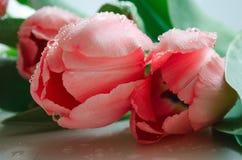 Belles tulipes roses avec le plan rapproché vert de fond de feuilles images stock
