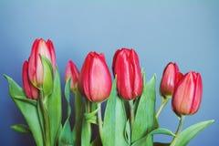 Belles tulipes rouges sur le fond gris Photographie stock libre de droits