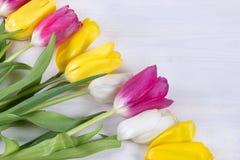 Belles tulipes sur le fond en bois Images stock