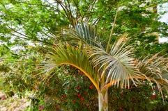 Belles usines du sud tropicales vertes luxuriantes, buissons, palmiers avec les branches luxuriantes et feuilles Le fond Photos stock