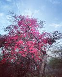 Belles usines indiennes avec de petites fleurs Photo libre de droits