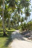 Belles vacances tropicales dans les oceanas ensoleillés chauds d'île de Seychelle image libre de droits
