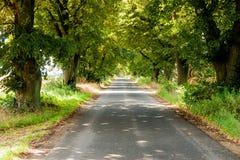 Belles vieilles chaux énormes du côté d'une route de campagne un jour ensoleillé d'été Photographie stock