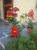 Belles vraies fleurs lues image stock