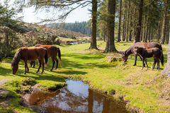 Bellever Dartmoor Devon stock afbeeldingen
