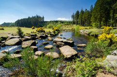 Bellever Forest And Dart River on Dartmoor National Park in Devo. Bellever Forest And Dart River on Dartmoor National Park In Spring Season, Devon, England royalty free stock photography