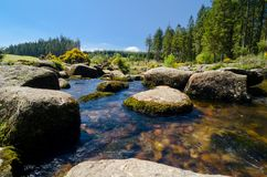 Bellever Forest And Dart River on Dartmoor National Park in Devo. Bellever Forest And Dart River on Dartmoor National Park In Spring Season, Devon, England stock image
