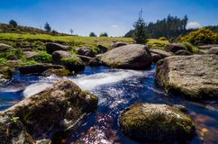 Bellever Forest And Dart River on Dartmoor National Park in Devo. Bellever Forest And Dart River on Dartmoor National Park In Spring Season, Devon, England stock photo
