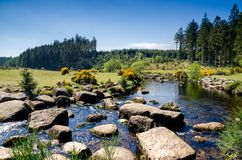 Bellever Forest And Dart River on Dartmoor National Park in Devo royalty free stock photography