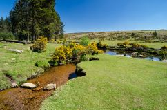 Bellever Forest And Dart River on Dartmoor National Park in Devo. Bellever Forest And Dart River on Dartmoor National Park In Spring Season, Devon, England stock photography