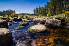 Bellever Forest And Dart River on Dartmoor National Park in Devo. Bellever Forest And Dart River on Dartmoor National Park In Spring Season, Devon, England royalty free stock photos