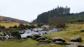 Free Bellever Forest, Dartmoor National Park, Devon,uK Royalty Free Stock Images - 87982799