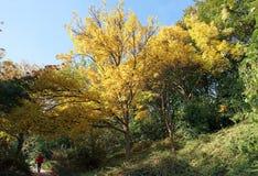 Belleville-Park in der Herbstsaison stockbilder