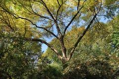 Belleville-Park in der Herbstsaison lizenzfreies stockfoto
