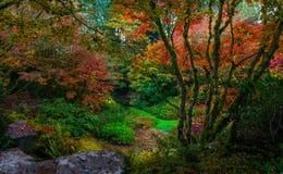 Bellevue Botanical Garden, Washington State. Fall color explodes at the Bellevue Botanical Garden in Washington State royalty free stock images