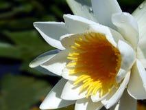 Belleza Imagen de archivo