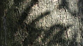 Belleza abstracta en naturaleza Sombra de hojas móviles en la superficie de la corteza de árbol almacen de video