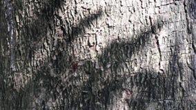Belleza abstracta en naturaleza Sombra de hojas móviles en la superficie de la corteza de árbol metrajes