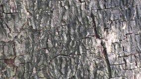 Belleza abstracta en naturaleza Sombra de hojas móviles en la superficie de la corteza de árbol almacen de metraje de vídeo