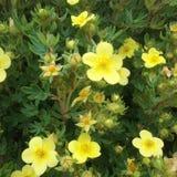 Belleza amarilla Foto de archivo libre de regalías