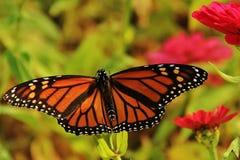 Belleza anaranjada Fotografía de archivo libre de regalías