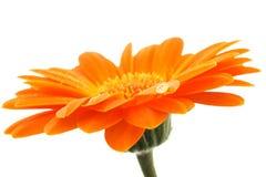 Belleza anaranjada Imagen de archivo libre de regalías