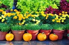 Belleza anaranjada Foto de archivo