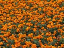 Belleza anaranjada Imágenes de archivo libres de regalías