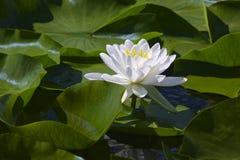 Belleza blanca Imagen de archivo libre de regalías