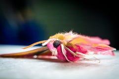 Belleza brillante del color de la mariposa tropical foto de archivo libre de regalías