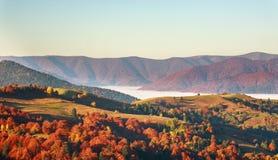 Belleza colorida del paisaje de los árboles y de los campos de las montañas del otoño en n foto de archivo