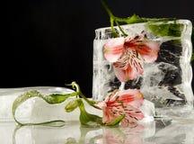 Belleza congelada Imagen de archivo libre de regalías