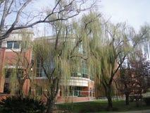Belleza de ETSU Imagen de archivo