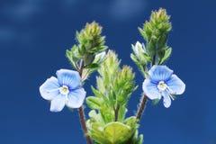Belleza de flores salvajes Imagen de archivo libre de regalías