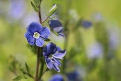 Belleza de flores salvajes Fotografía de archivo