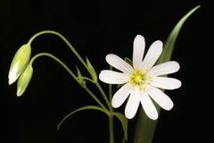 Belleza de flores salvajes Foto de archivo libre de regalías