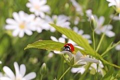 Belleza de flores salvajes Fotografía de archivo libre de regalías