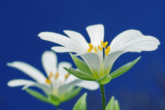 Belleza de flores salvajes Fotos de archivo