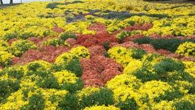 Belleza de la caída del flower power Imágenes de archivo libres de regalías