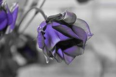 Belleza de la distorsión de la foto Fotografía de archivo