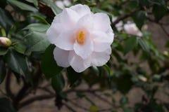 Belleza de la flor foto de archivo