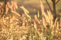 belleza de la hierba Imágenes de archivo libres de regalías