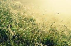 Belleza de la mañana Imagen de archivo