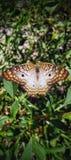 Belleza de la mariposa foto de archivo libre de regalías