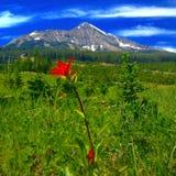 Belleza de la montaña Imagenes de archivo